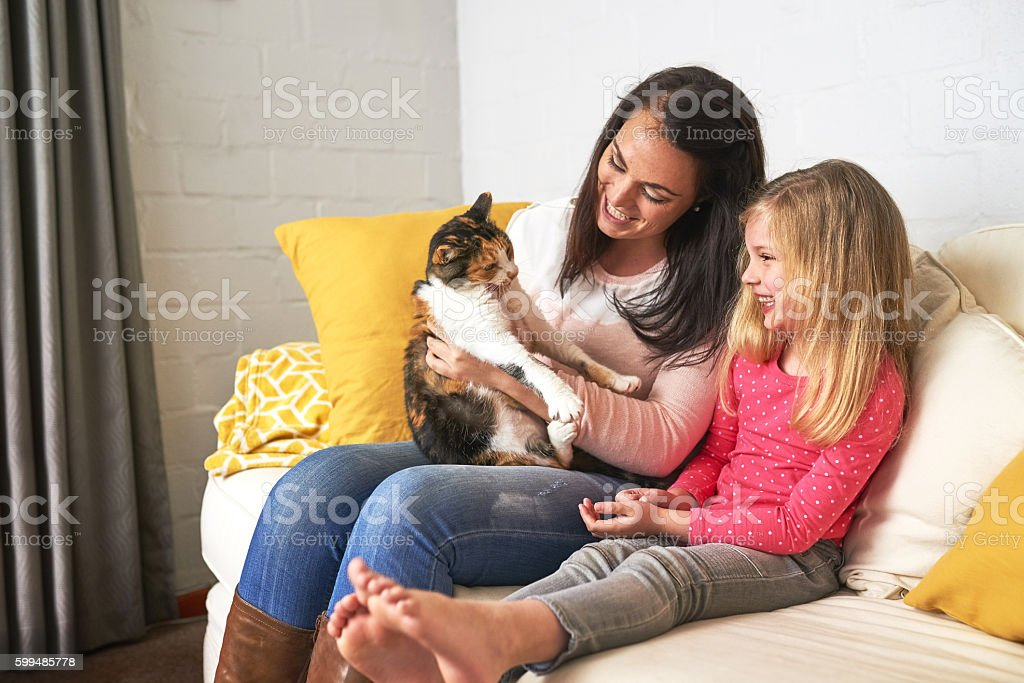 Kitty brings us so much joy stock photo
