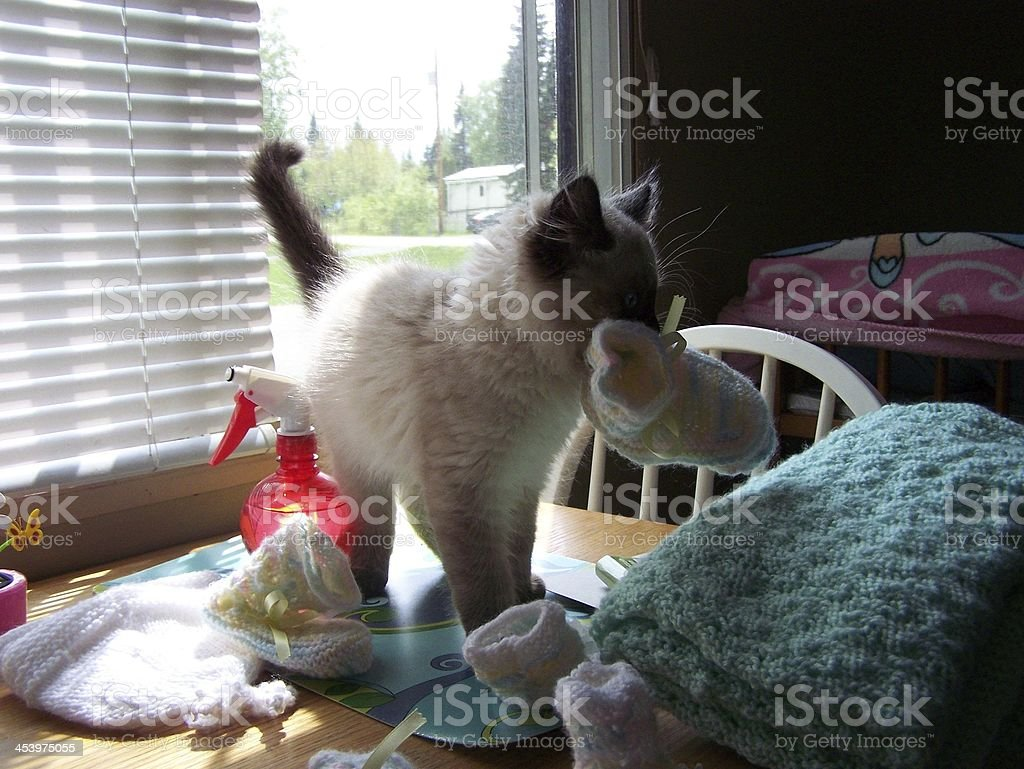 Kitty carries bootee stock photo