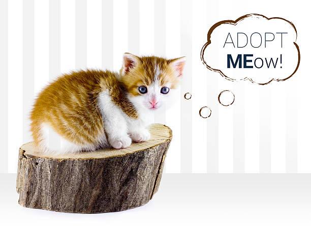 Kitty cat adoption picture id476955196?b=1&k=6&m=476955196&s=612x612&w=0&h=kmxxvmtxpiu3pgfxphbdszjg4nwriexatbsddzl5iyy=