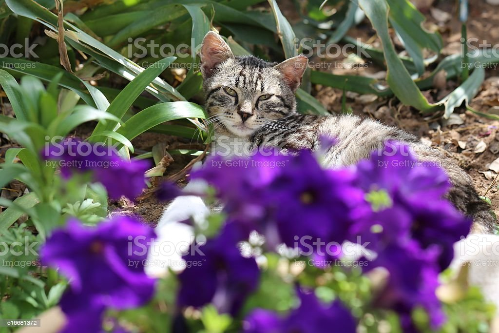 Kitty Cat stock photo