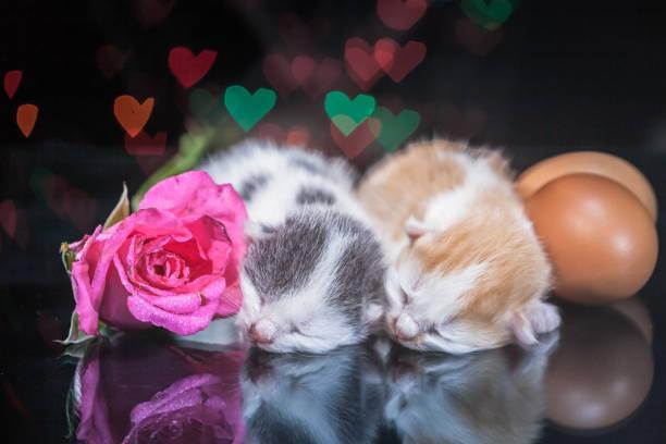 Kitty cat sleeping on glass picture id640328418?b=1&k=6&m=640328418&s=612x612&w=0&h=ch2nkpxqhahiunhnlin 1fpik3w rjhp0xhowlczmkk=