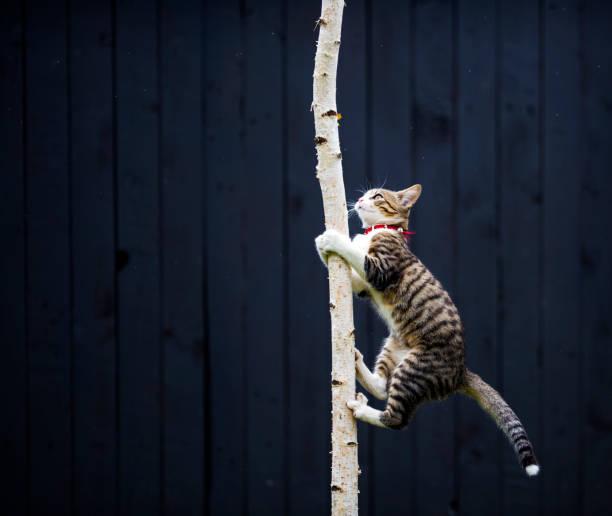 Kitty climbing on tree picture id641373156?b=1&k=6&m=641373156&s=612x612&w=0&h=9pvc90jkgnpe8x7aacztfpdqygo4onlj8xof0yvruwa=