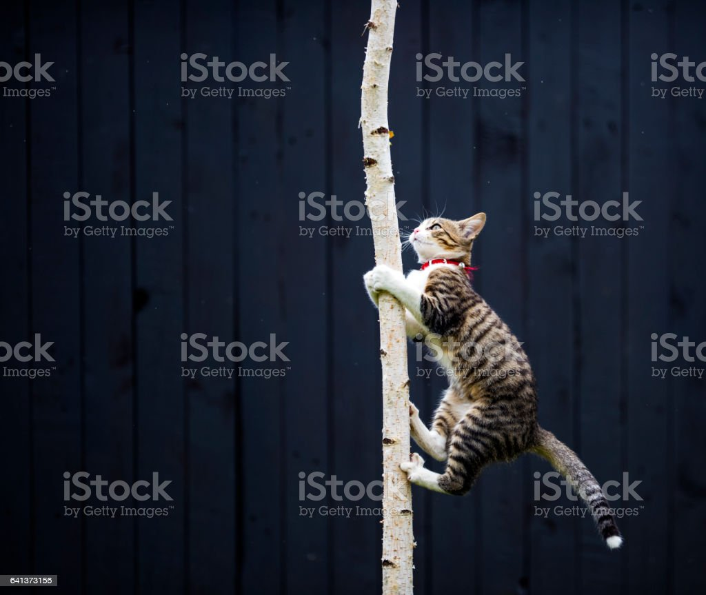 kitty climbing on tree stock photo