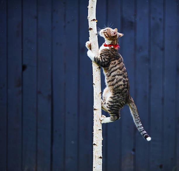 Kitty climbing tree picture id543656316?b=1&k=6&m=543656316&s=612x612&w=0&h=r5mfwqvakjwz4lbv1cn1ofdybb3xqmehjm  nebpjvy=