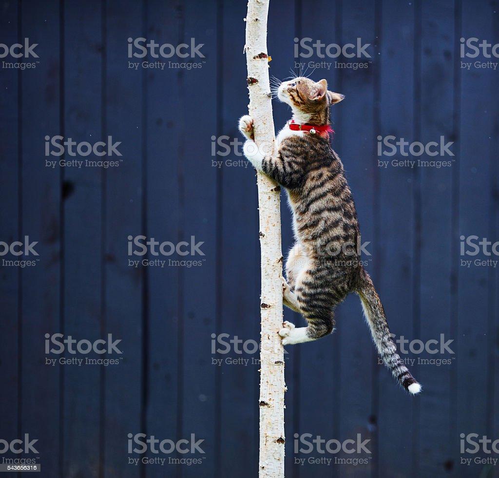 kitty climbing tree stock photo