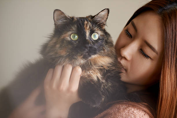 Kitty cuddles stock photo
