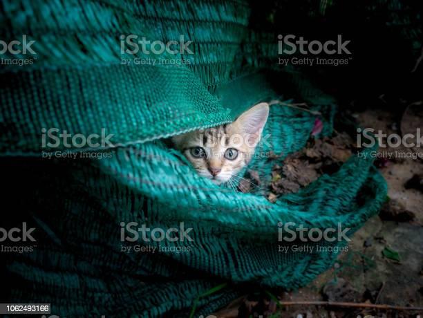 Kitty hiding in the hidden picture id1062493166?b=1&k=6&m=1062493166&s=612x612&h=qgxt 5wh4u jschmwraqvsk3dbox7qpnnezgo t1tl0=