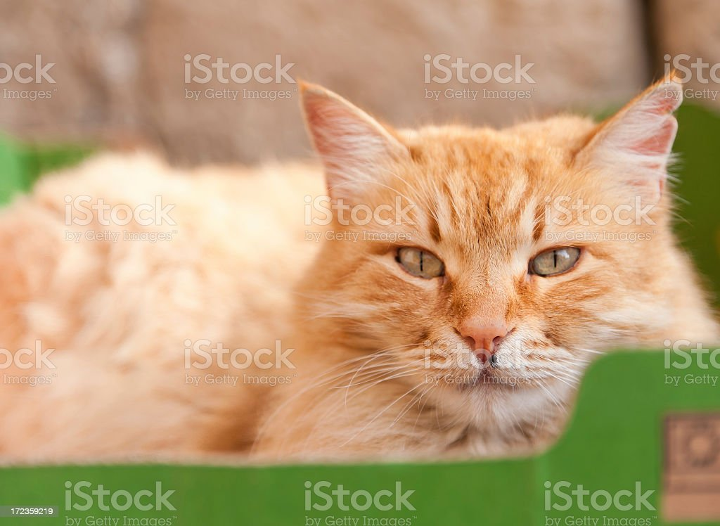 Kitty in a Box royalty-free stock photo