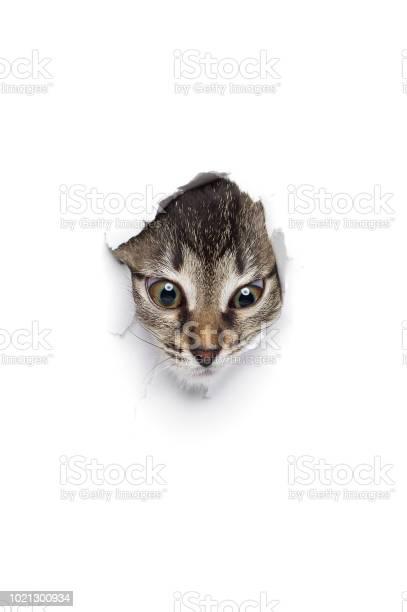 Kitty in hole of paper picture id1021300934?b=1&k=6&m=1021300934&s=612x612&h=llukcodnr66grpnxwlzuxgb86dddwqcz7u8iq mvky4=