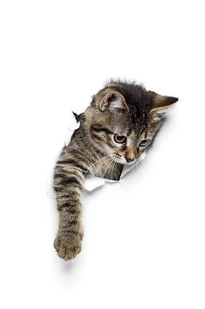 Kitty in hole picture id609715752?b=1&k=6&m=609715752&s=612x612&w=0&h=wpr2dxgahh0nrrwkve6fxralic ixwigjjtblhwnmr8=