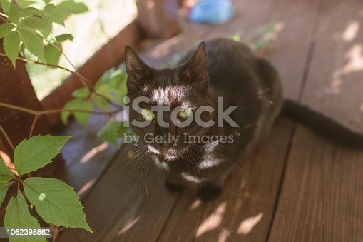 Black Cat, Domestic Cat, Tabby Cat, Animal, Feline