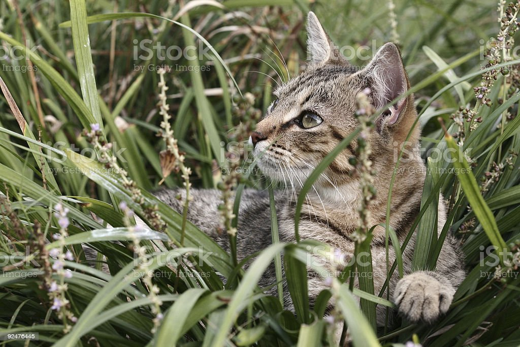 Kitty in the Grass royalty-free stock photo