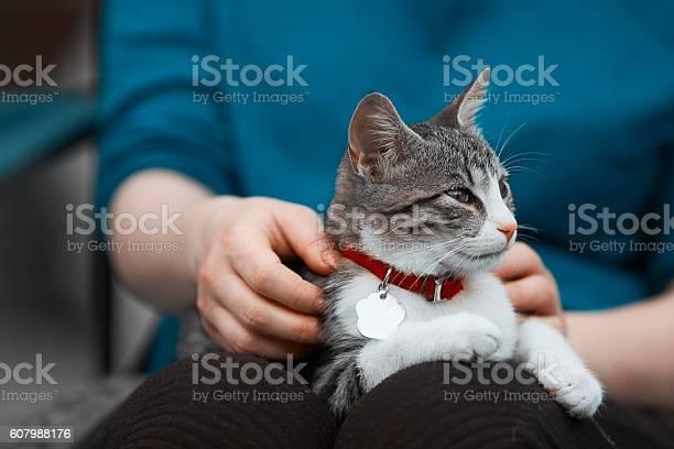Kitty in woman hands picture id607988176?b=1&k=6&m=607988176&s=612x612&h=vu6mlekvkualsyzzvxi7r28rwrxpsf8nxtdvfvdtz0e=
