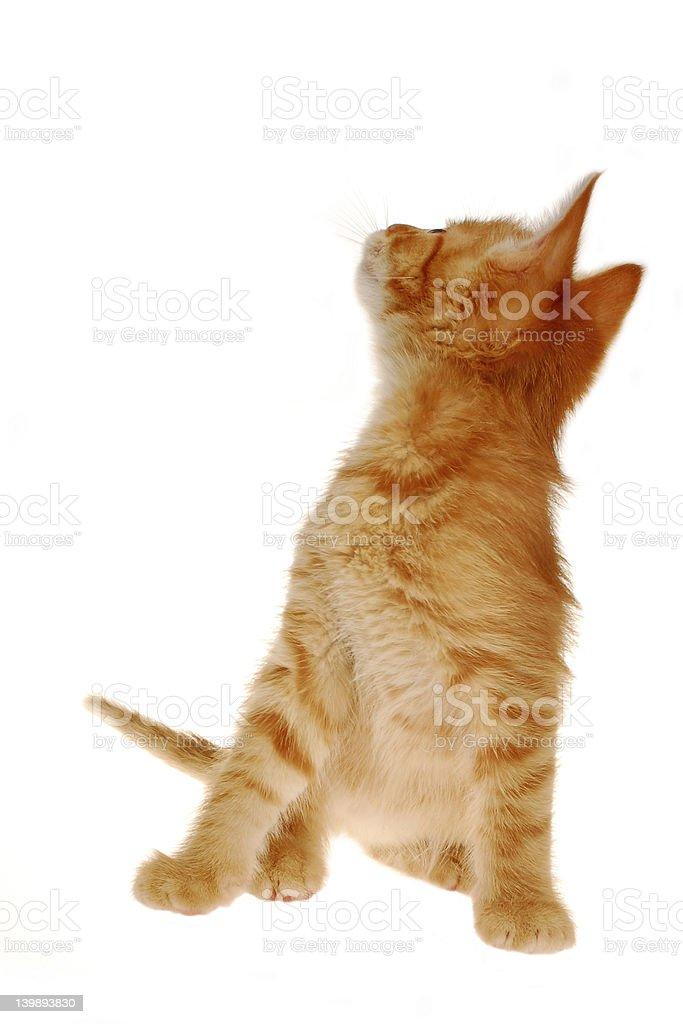 Kitty look royalty-free stock photo