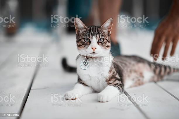 Kitty looking at camera picture id627036386?b=1&k=6&m=627036386&s=612x612&h=xjnyfg4pvowpu9zmygktwkgt38kmokurgfxs8yfbali=