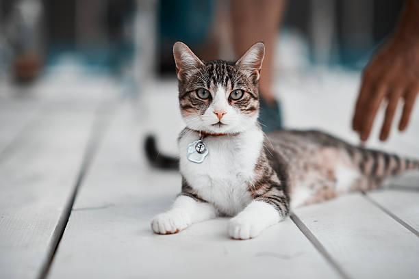Kitty looking at camera picture id627036386?b=1&k=6&m=627036386&s=612x612&w=0&h=eql kcesgt r0q4a9h4jmsqbnzozelpzkk6idkcgxai=