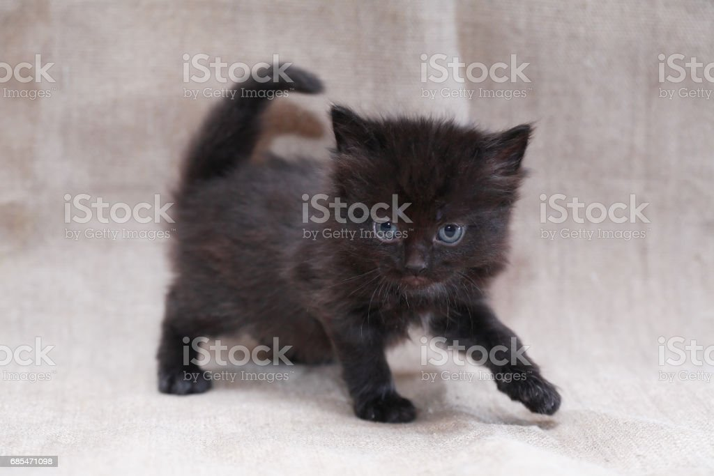 Kitty On Canvas foto de stock royalty-free