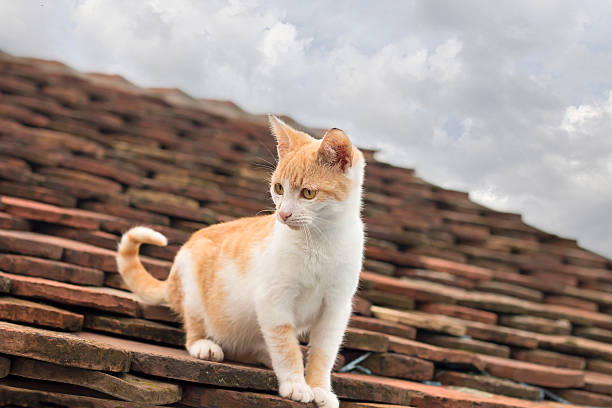 Kitty on the roof​​​ foto