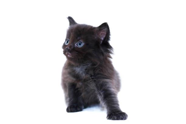Kitty On White stock photo