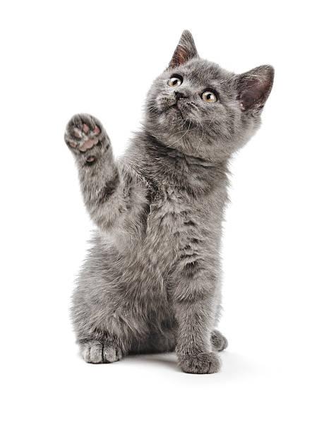 Kitty picture id120893503?b=1&k=6&m=120893503&s=612x612&w=0&h=mgbsfvs2ua69fhqfypmkg9dvow9naiphmiln1 bhgcs=