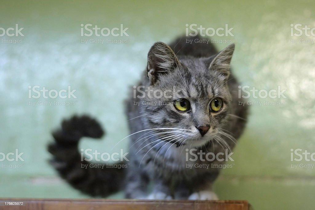 Kitty royalty-free stock photo