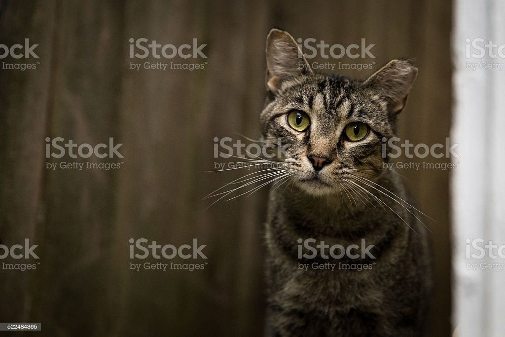 Kitty stock photo