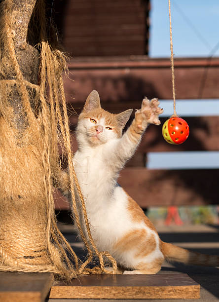 Kitty playing with ball on cat tree​​​ foto