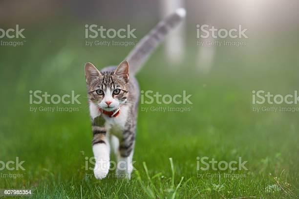 Kitty portrait in summer picture id607985354?b=1&k=6&m=607985354&s=612x612&h=flvfw7p7 dwftr1w ecr2utvaskws a 5ktlpfqm so=