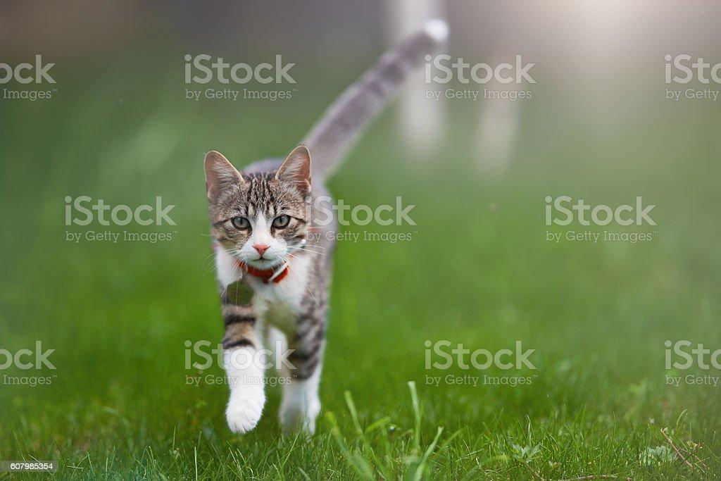 kitty portrait in summer stock photo