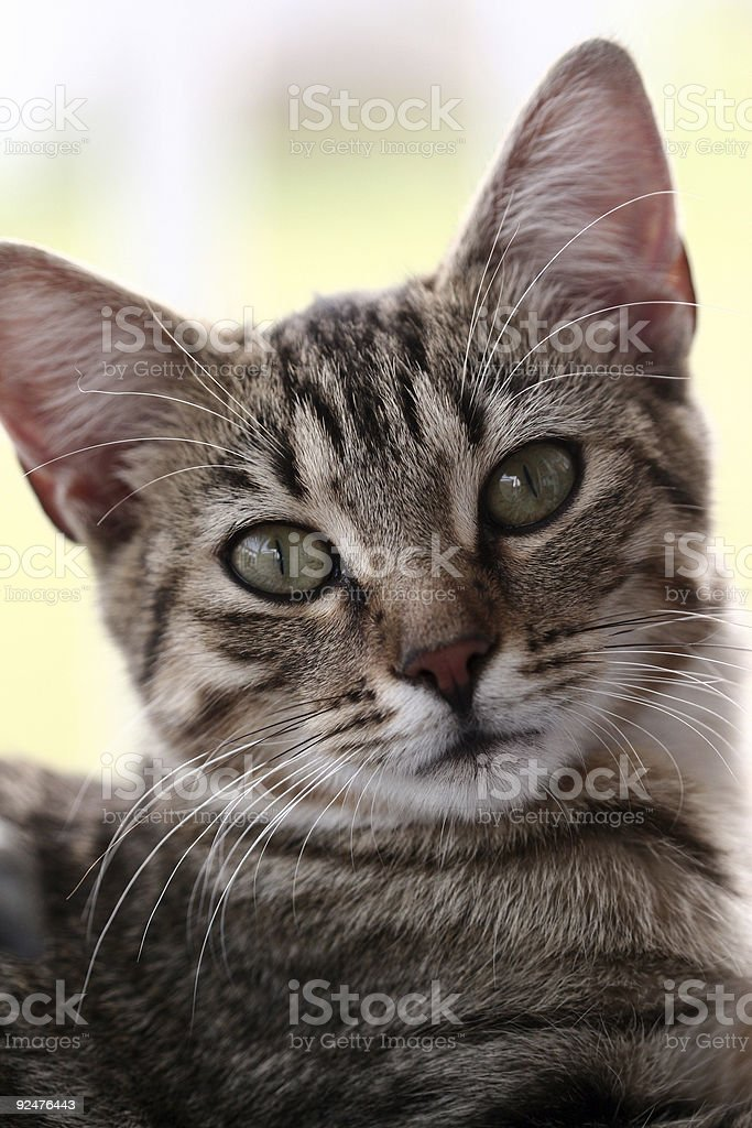 Kitty Pose royalty-free stock photo