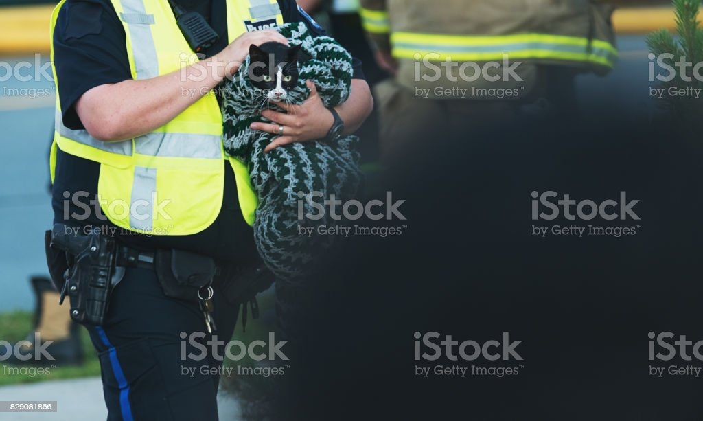 Kitty Rescue stock photo
