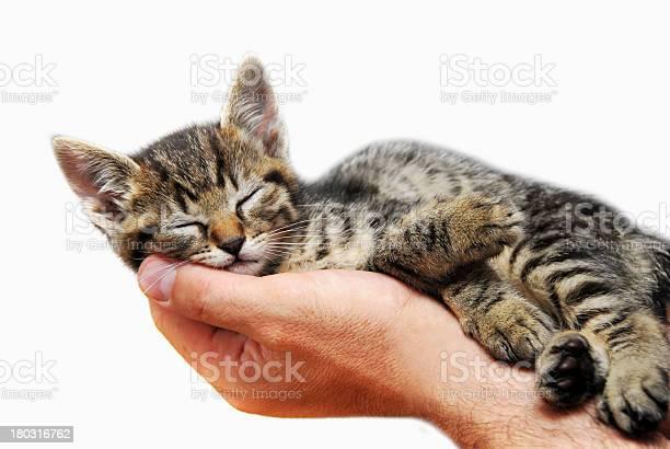 Kitty sleeping on palm picture id180316762?b=1&k=6&m=180316762&s=612x612&h=eikwblx7qh1jr0fzav iff079nrik5ixgyu8pmmvqjq=