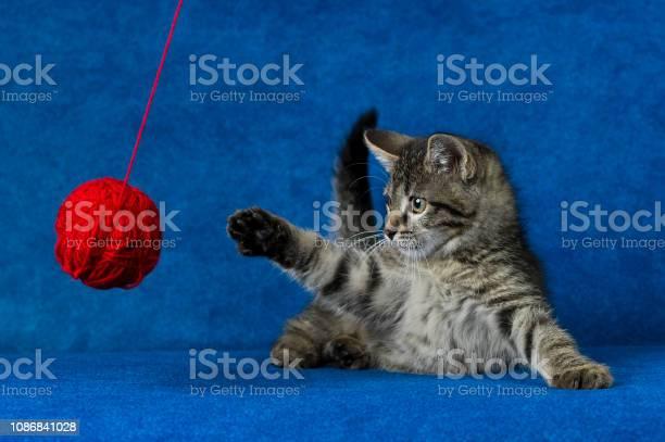Kitty with yarn ball picture id1086841028?b=1&k=6&m=1086841028&s=612x612&h=bsyxlmdgzooh7jt59su8e4 5jcgppzyyrnyklv 379g=