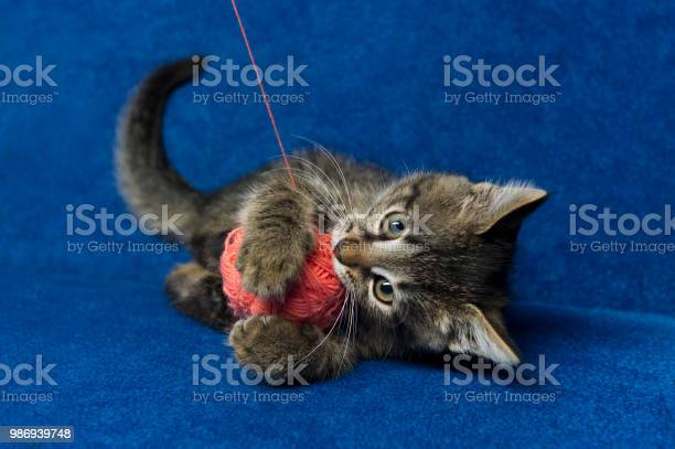 Kitty with yarn ball picture id986939748?b=1&k=6&m=986939748&s=612x612&h=cy4w7ja7466tpi5dgysbrueeqmnfofwlv2 ob0oft5c=