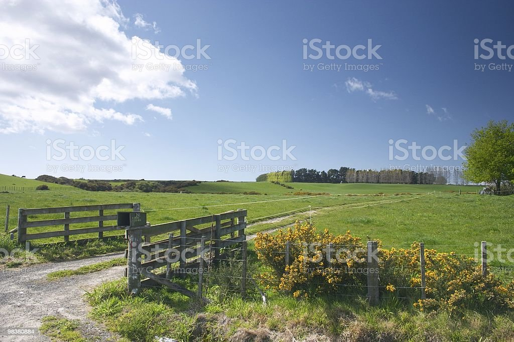 Kiwi farmland royalty-free stock photo