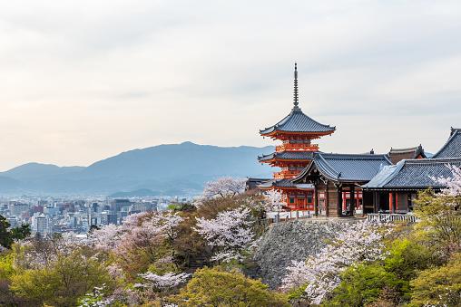 Kiyomizu dera temple in spring