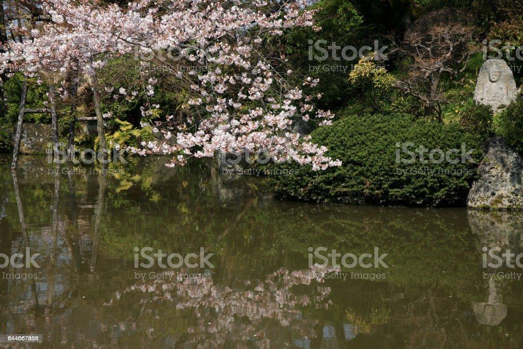 Kiyomizu-dera in Cherry stock photo