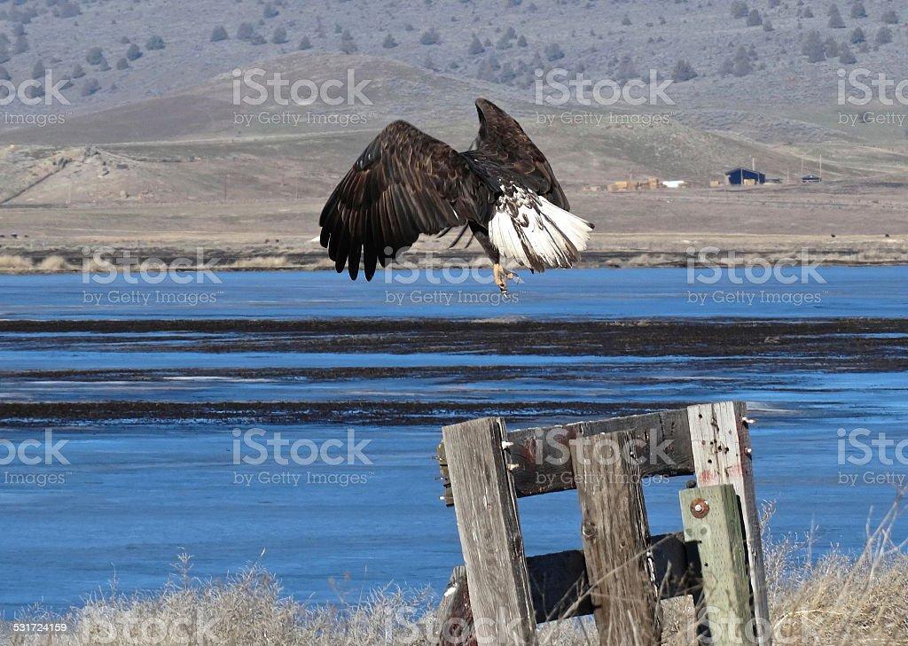 Klamath Eagle Launch stock photo