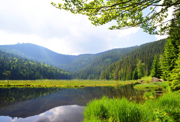 kleiner arbersee lake, bayersk skog, tyskland. - bayerischer wald bildbanksfoton och bilder
