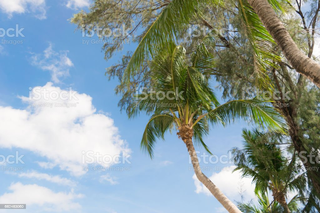 Klong Prao Beach Koh Chang Trad Thailand royalty-free stock photo