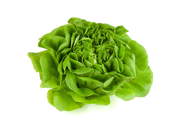 knackiger salatkopf salatkopf isoliert auf weissem grund butterhead lettuce stock pictures, royalty-free photos & images