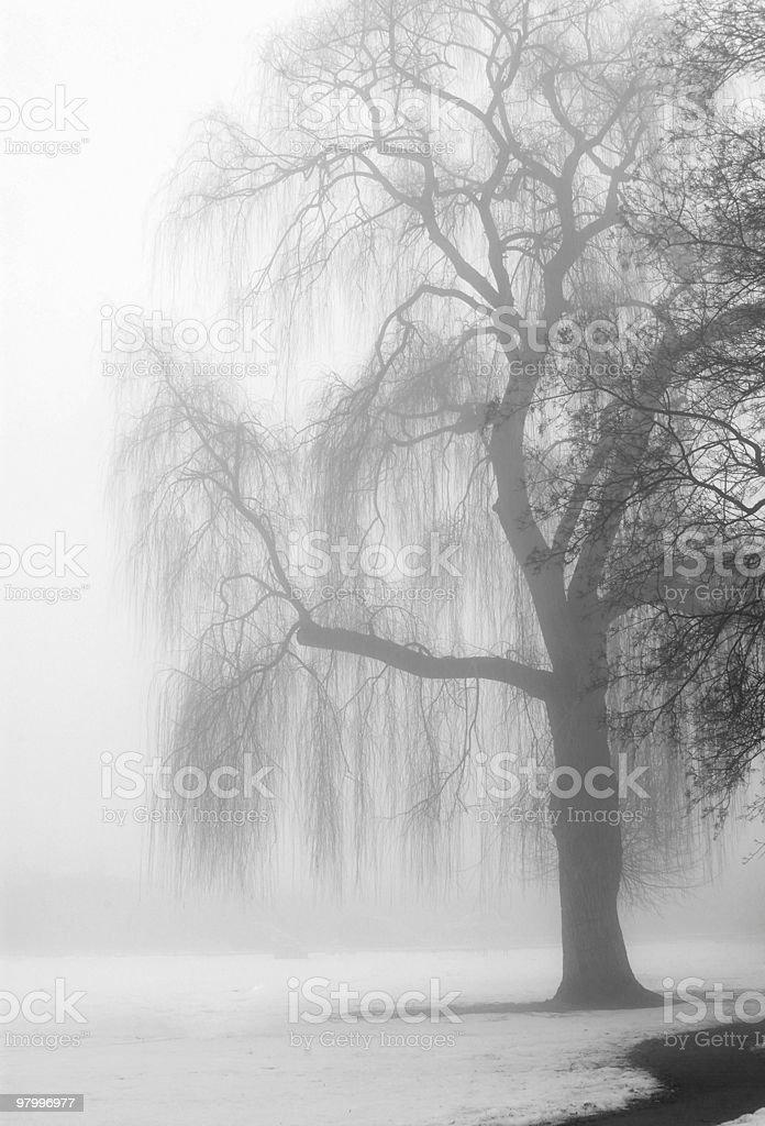 knarly tree in the fog royalty-free stock photo