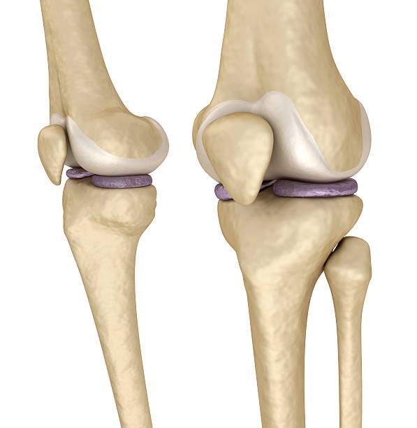 knee anatomy. isolated on white. medically accurate 3d illustration - knäskål bildbanksfoton och bilder