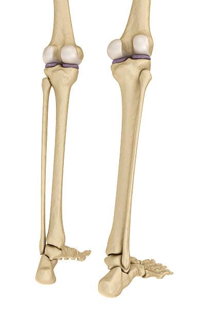 Knie Anatomie Seitlichen Ligament - Bilder und Stockfotos - iStock