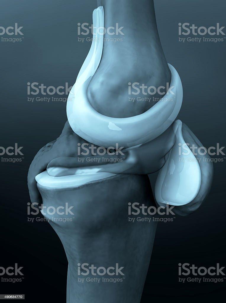 knee illustration stock photo