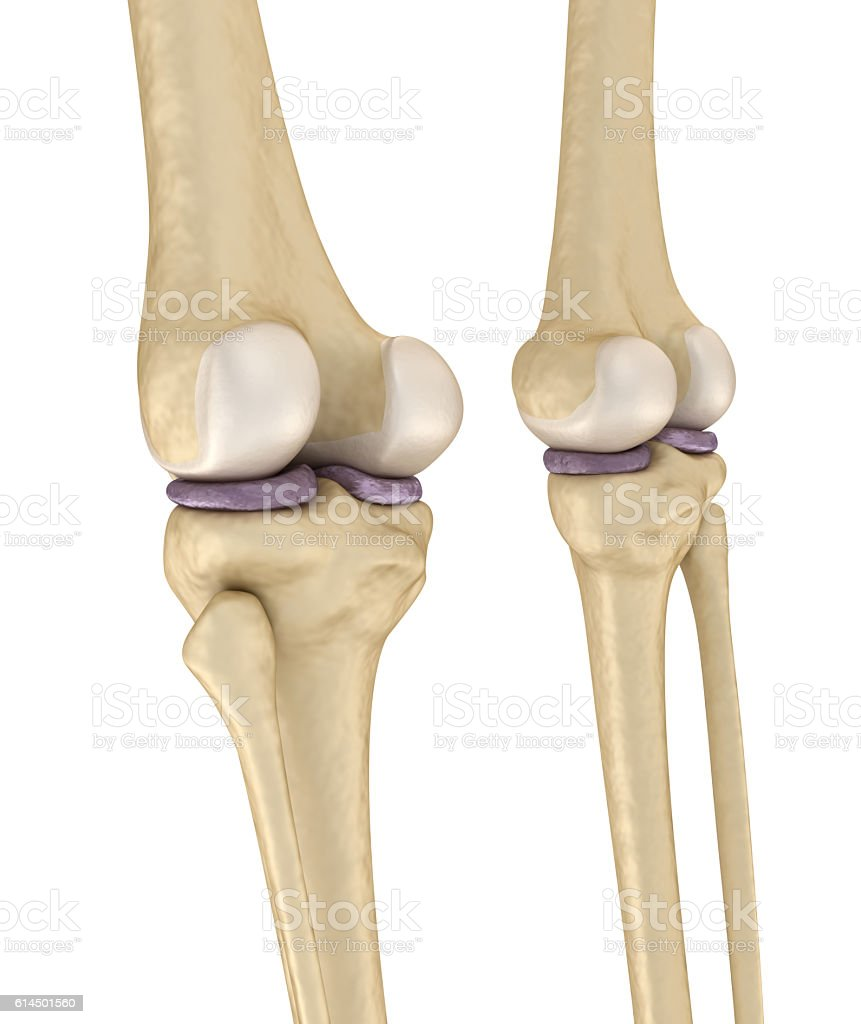 Knee joint anatomy. Medically accurate 3d illustration . stock photo