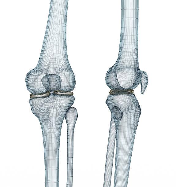 knee joint anatomy. medically accurate wire 3d illustration. - knäskål bildbanksfoton och bilder