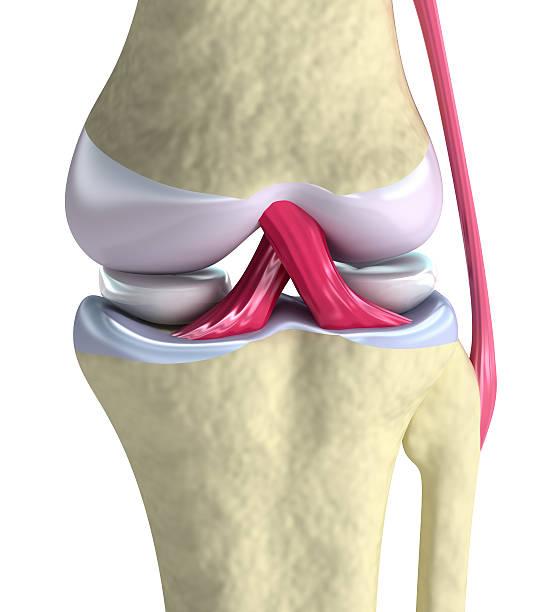articolazione del ginocchio primo piano - menisco foto e immagini stock