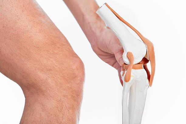 articolazione al ginocchio - menisco foto e immagini stock