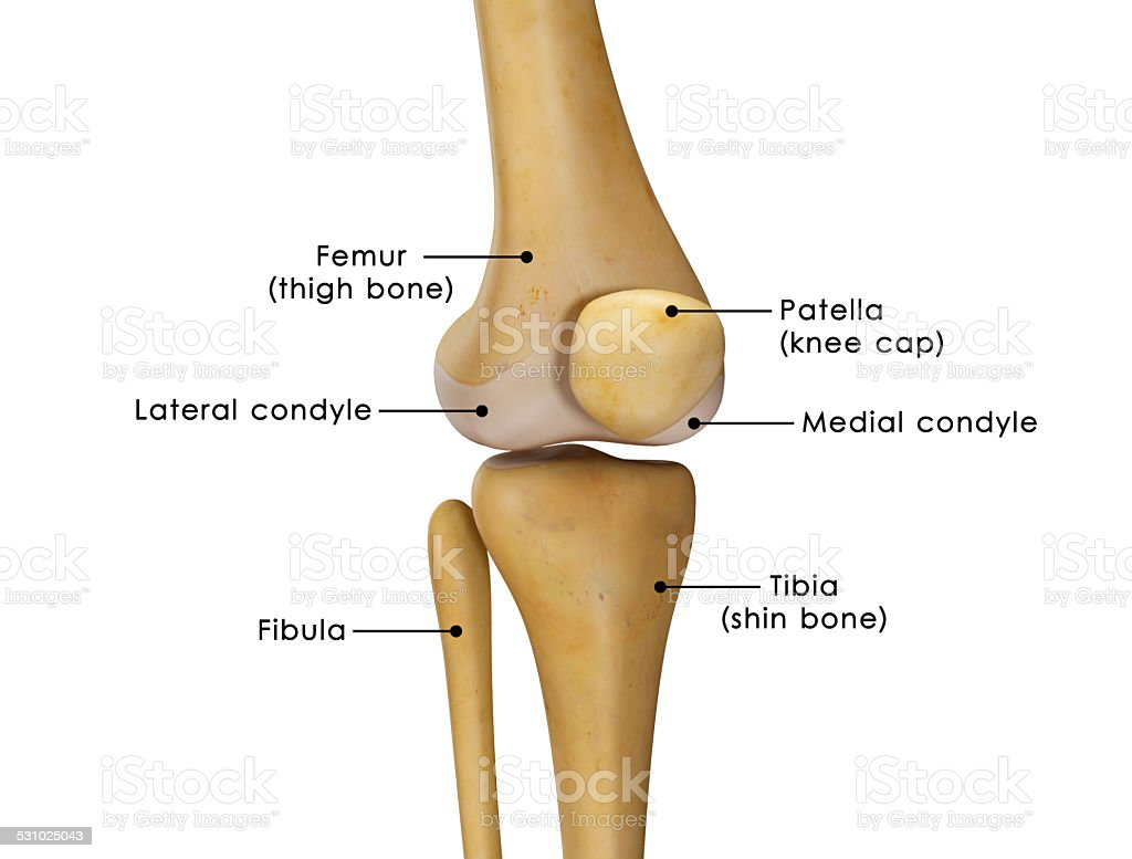 knee joint stock photo
